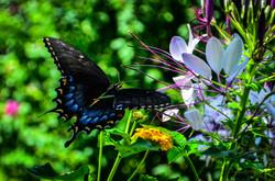 Butterfly Color Burst