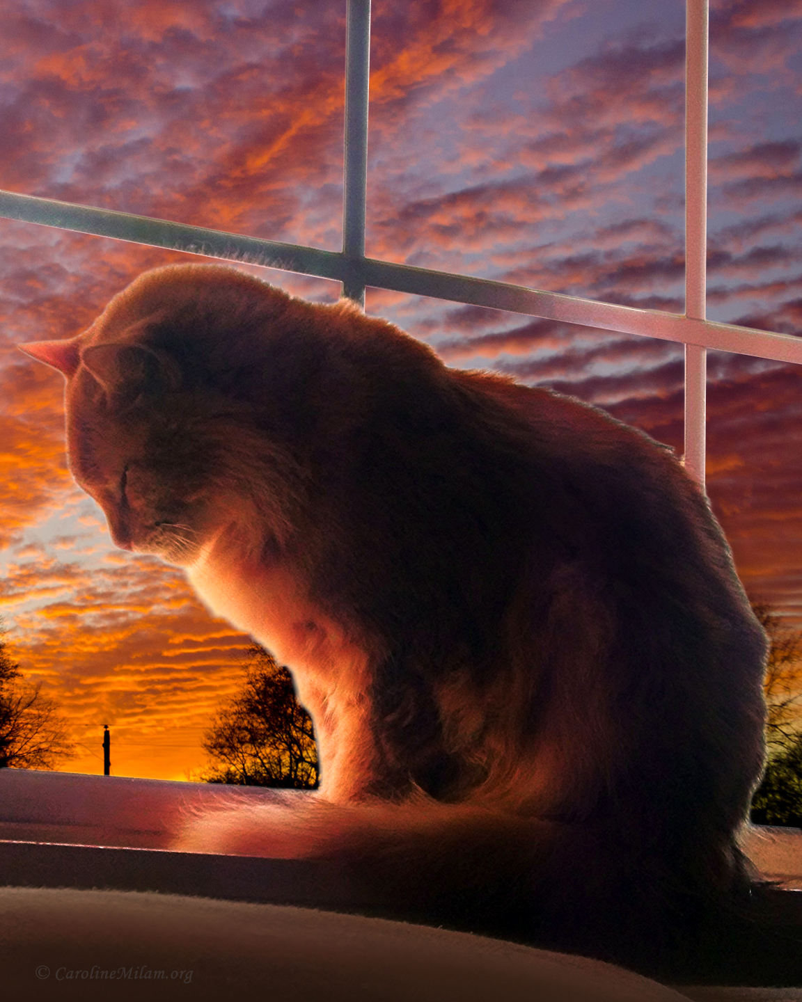 Tom Cat at Sunset