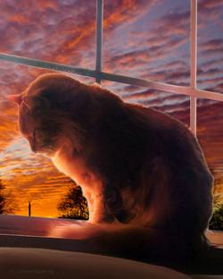 Tom Cat at Sunset