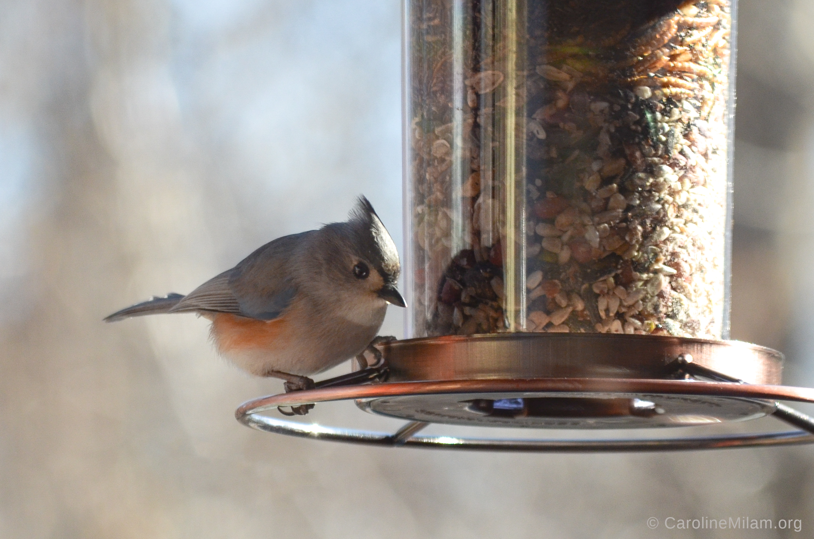 At the feeder