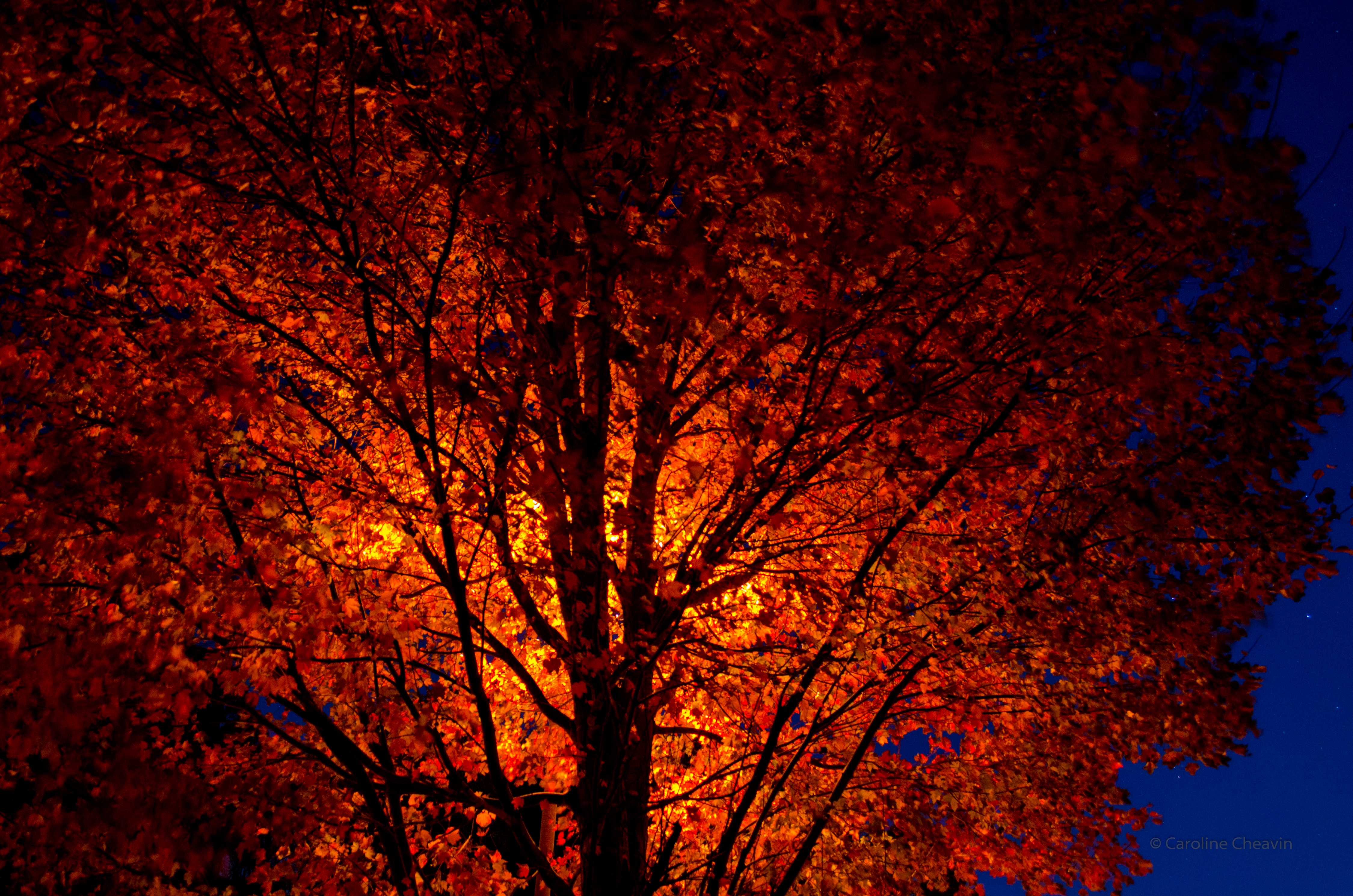 Autumn Leaves by Street Light View