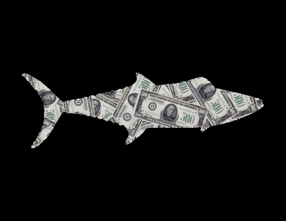 King Mackerel Moneyslide.png