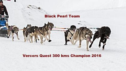 Alaskan Husky, No speed Limit.eu, Element.vet, Howling Dog Alaska