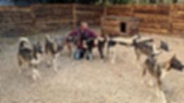 Alaskan Husky, Wolfood Start Energy, Wolfood Breeding, Element.vet, Howling Dog Alaska, No Speed Limit.eu