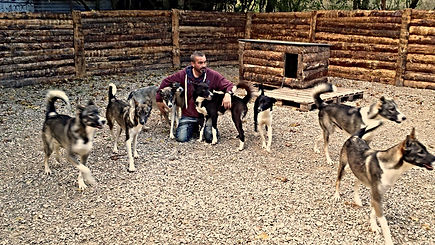 Alaskan Husky, Wolfood Start Energy, Wolfood Breeding, Element.vet, Howling Dog Alaska, No Speed Limit.eu