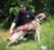 Howling Dog Alaska, No Speed Limit.eu