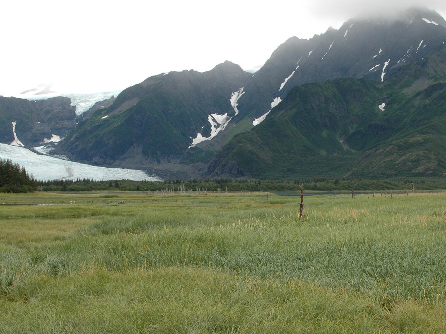 cwp-pedersen-alaska2005.png