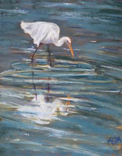 Egret Reflections A18