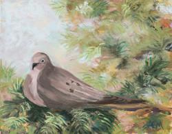 G'Morning Dove