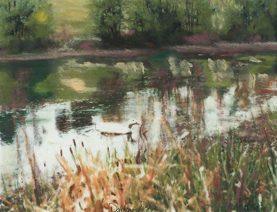 Dahlgren Pond
