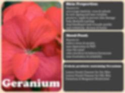 geranium_Fotor.jpg