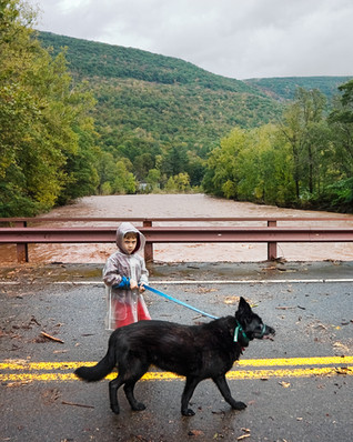 Dog Walk During the Flood