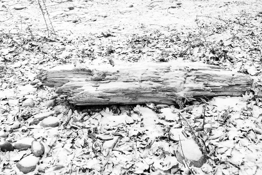 New Snow Stump
