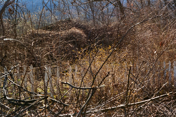 Boiceville Overgrown Fence