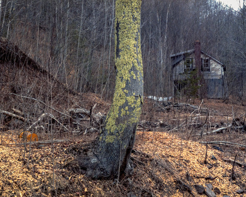 Lanesville Home with Lichens