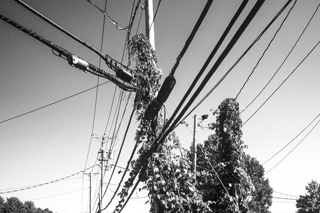 Utility Pole Wires and Ivy Facing South