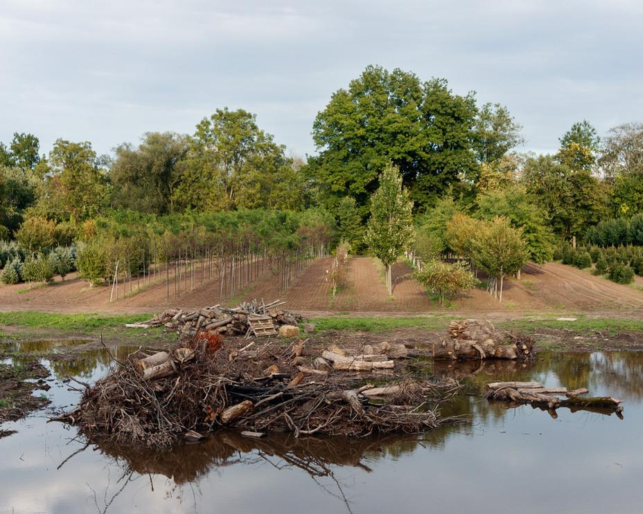 Tree Farm Pond with Stumps