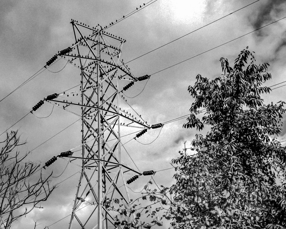 Winter Crows on Tower