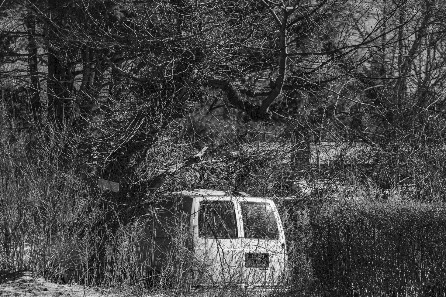 Van in Tree