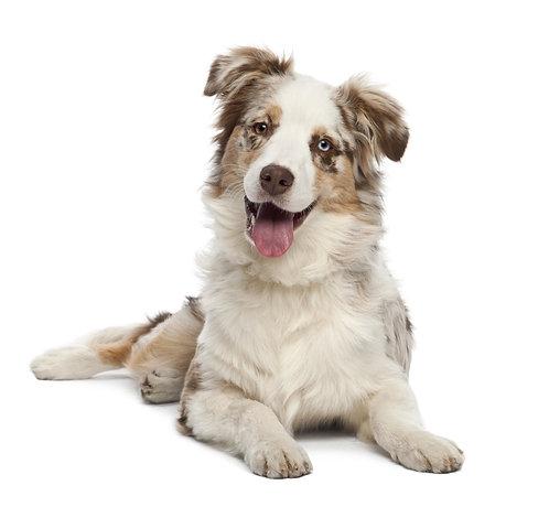 Cerca nelle varie sezioni il prodotto più adatto al tuo cane