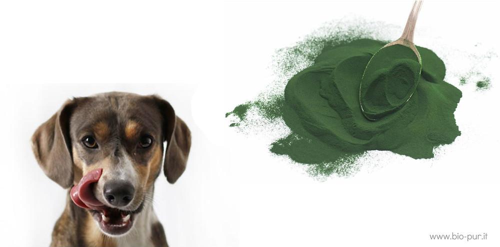 spirulina-per-cani