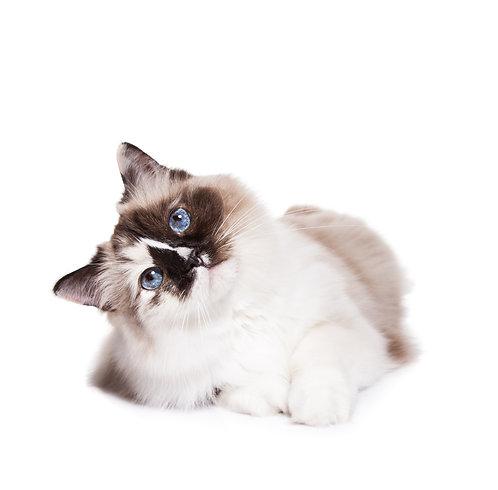 Cerca nelle varie sezioni il prodotto più adatto al tuo gatto