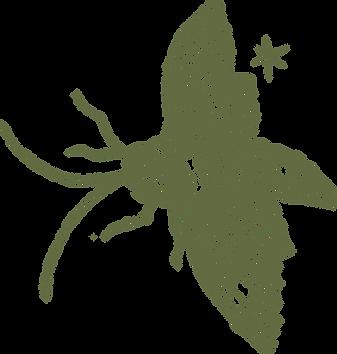 Papillon Vert.png