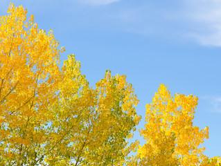 花粉が飛ぶ秋。猛暑だから心配しています。