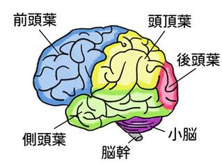感情の老化、脳の前頭葉、精油の香り