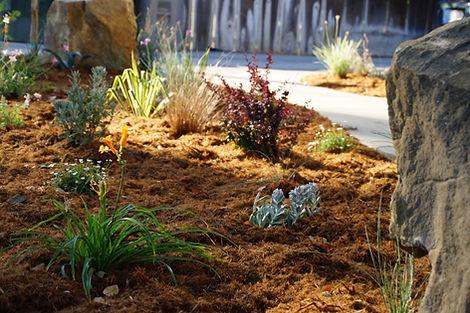 Plants in Shredded Redwood.JPG