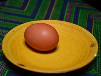 卵が産まれました!