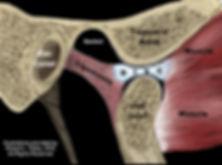 Posicionamento normal do disco articular com a boca aberta. Dr. Luis Pagotto.