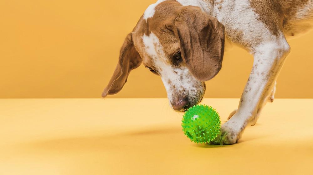 Cães adoram correr em busca de brinquedos - Crédito: Freepic Diller