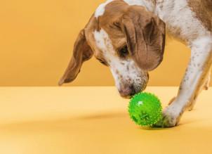 Pets na quarentena: saiba como mantê-los saudáveis sem descumprir regras