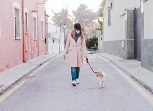 Pandemia de coronavírus: cuidados básicos para se ter com cães e gatos