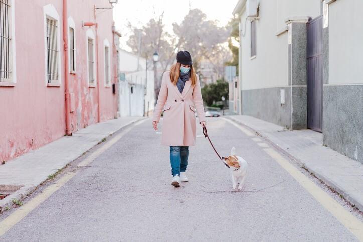 Cuidados com os pets são sempre importantes - Crédito:  Vet Quality