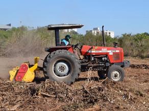 Economia e sustentabilidade: resíduos de poda urbana podem ser utilizados na agricultura