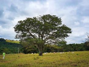 """Concurso fotográfico do """"Corredor Caipira"""" visa evidenciar questão ambiental e cultura local"""