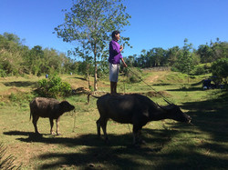 Join In And Ride A Water Buffalo