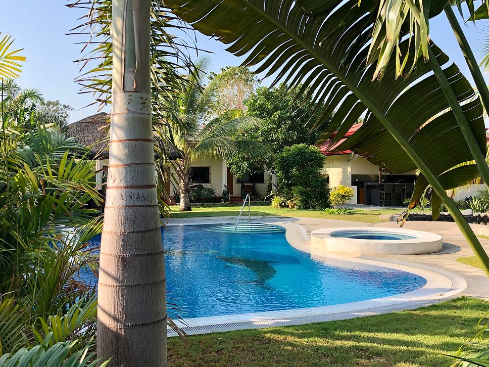 Swimming pool and garden