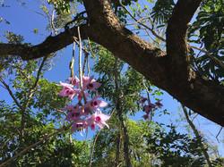 Wild Orchids In Blackberry Tree