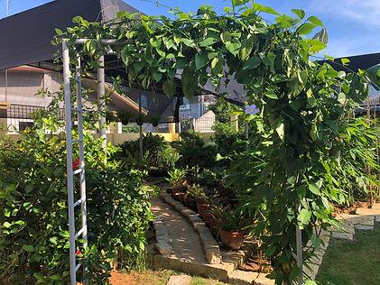 Jungle Garden.jpg