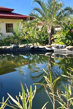 Koi Pond in Strutz Art Garden Resort