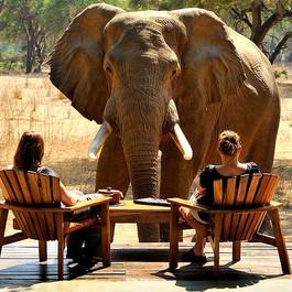 Tarangire; Elephants' Home