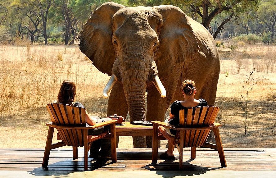 Tarangire; Elephants' Home