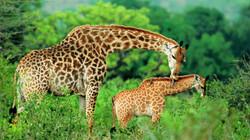 Welcome to your Dream Luxury Tanzania Safari