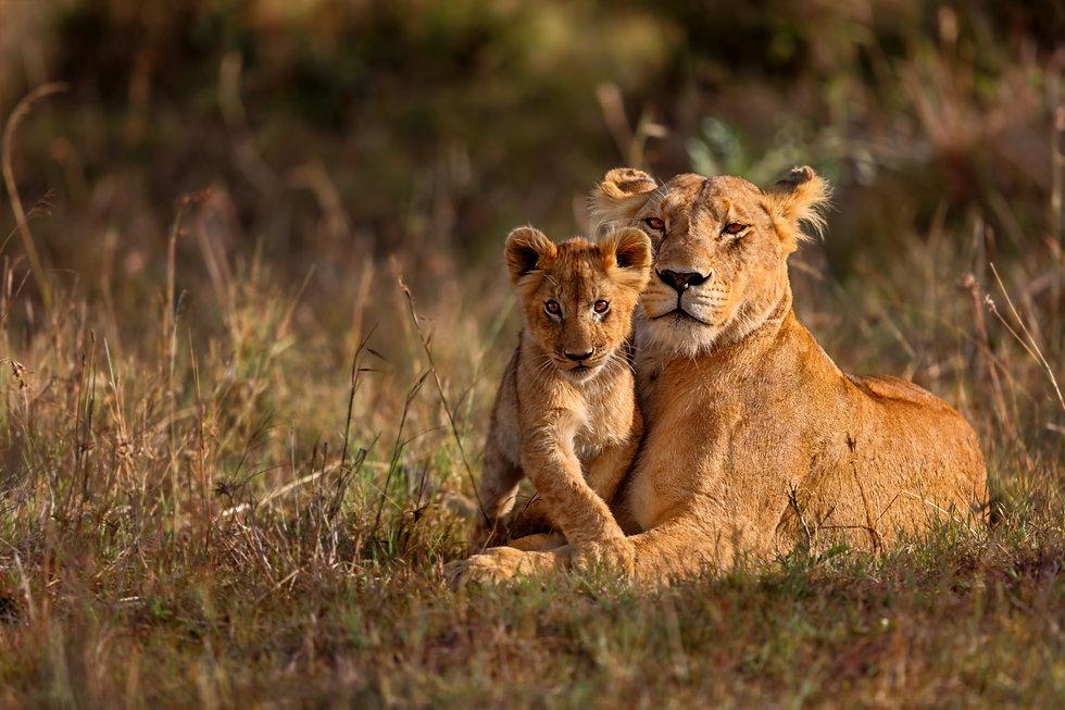 Dream-Luxury-Tanzania-Safaris-Lion-Serengeti.jpg