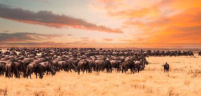 AROYÓ-Luxury-Safari-Serengeti-Migration.jpg
