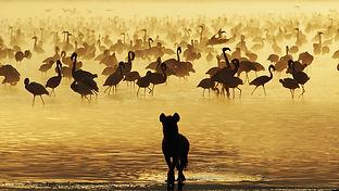 AROYÓ-Luxury-Safari-Flamingo-Lake-Manyara.jpg