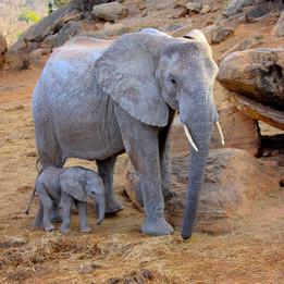 Ngorongoro Crater's Elephants